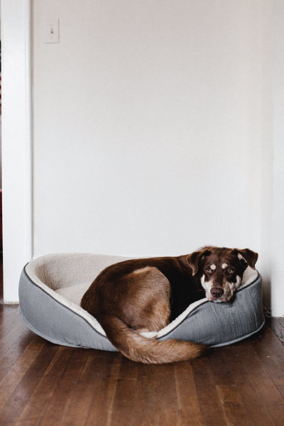Dog brown bed